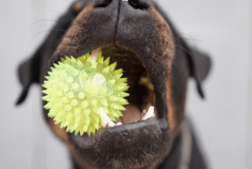 What Causes My Dog's Bad Breath?