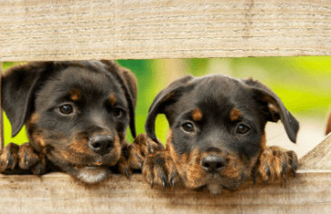 Finding Pet Emergency Care in Sante Fe